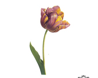 Vintage Tulip, floral Illustration tattoo  Body Art, Wickedly Lovely Skin Art Temporary  tattoo (includes two tattoos)