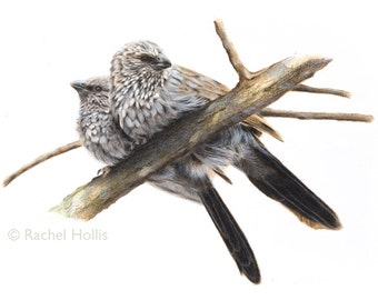 Bird Print - Bird Art - Apostlebirds
