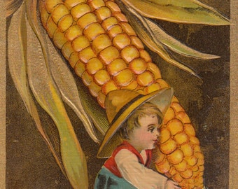 C 1910 Thanksgiving Postcard With Boy Carrying Embossed Corncob