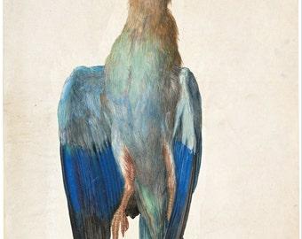 Dead Blue Roller by Albrecht Dürer Home Decor Wall Decor Giclee Art Print Poster A4 A3 A2 Large Print FLAT RATE SHIPPING