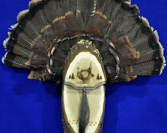 Turkey Hunting.Turkey Fan. Turkey Fan Mount. Turkey Fan Plaque.Turkey Hunting Gift. Turkey Fan Display. First Turkey. Hunting. Hunter Gift.