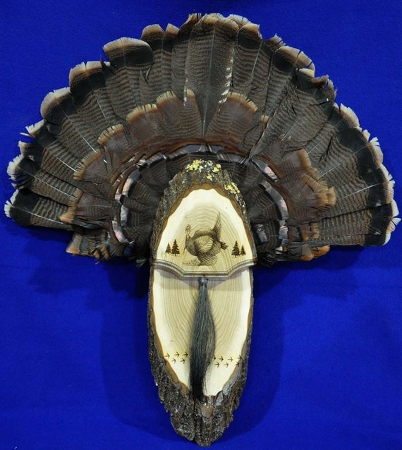 Turkey hunting turkey fan turkey fan mount turkey fan for Turkey fan mount template