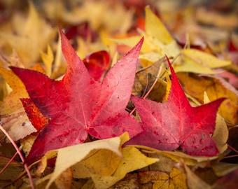 Love - Autumn Colours - Autumn Leaves - photography fine ART PRINT