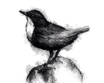 Dipper bird | Limited edition fine art print from original drawing. Free shipping.