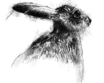 European brown hare | Limited edition fine art print from original drawing. Free shipping.