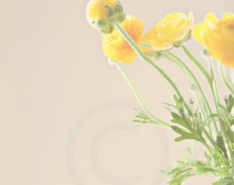 Yellow Ranunculus in a Jar Photographic Print- Choose Your Size