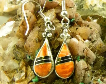 Spiney Oyster and Sterling Silver Earrings