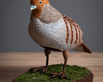 Grey Partridge - Life size wood carving