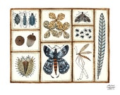 LARGE Nature Collection Print, giclee print, watercolor print, moth specimens, insect illustration