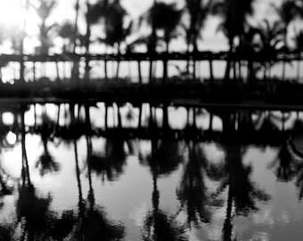Tropical Black and White Beach Decor Palm Tree Print, Modern, Abstract, Tropical Decor, Dorm Wall Art