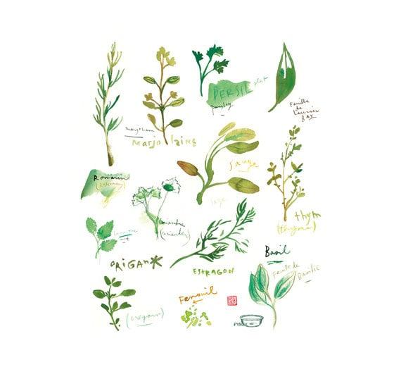 les herbes aromatiques dans la cuisine par lucileskitchen sur etsy