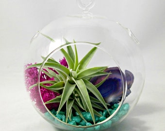 Purple Sea Foam Air Plant Terrarium