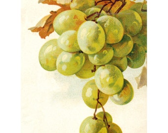 Green Grapes Card | Wine Greeting Card | Option Matching Sticker