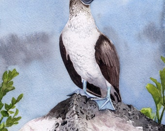 Blue Footed Booby Original Watercolor Bird Painting