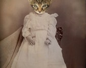Kitten Art, Anthropomorphic Art, Cat in Dress, Animal in Clothes, Victorian Art, Tabby Cat Art, Mixed Media Collage