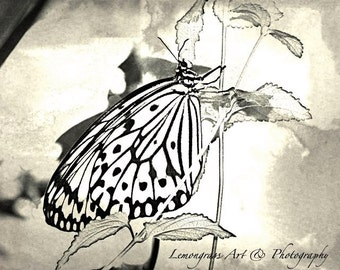 Butterfly (I) Insect Photography, Fine Art Print, Monochrome, Black & White, Insects, Beautiful Butterflies, Wall Art/Decor