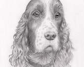Pencil Dog Portrait: Custom drawing of your pet dog. Pencil portrait of any type of dog from a photograph