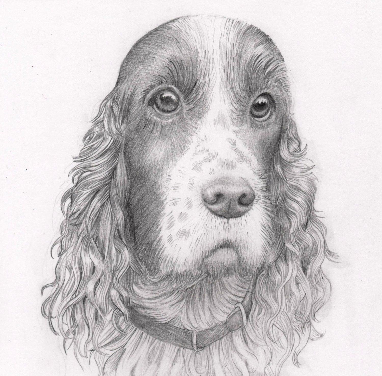 Pencil Dog Portrait: Custom drawing of your pet dog. Pencil