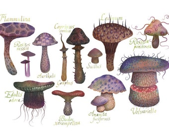 The Fungus Species II - A4 art print