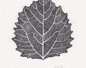 "Block print: Bigtooth Aspen leaf - limited edition hand pulled fine art block print, linocut print (5 x 7"")"