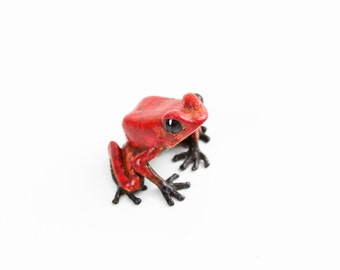 Poison dart frog - small - red & black - Bronze