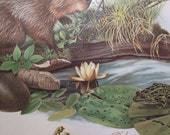 Beaver Print // Richard Timm // 1974 // J.L. Wade // Wildlife Print // Poster // Home Decor // Wall Hanging