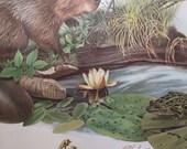 Beaver Print // Richard Timm // 1974 // J.L. Wade // Wildlife Print // Poster // Home Decor // Wall Hanging