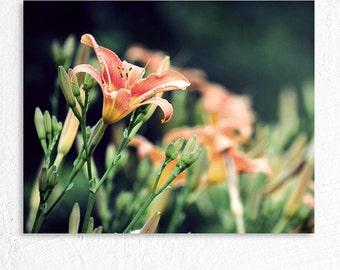 Nature Flower Photography Orange Tiger Lily Vintage Feel Photo Print