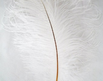 "Ostrich Feathers, 12-16"" long, 5 Colors to choose from, Hand Selected, wedding feathers, hat feathers, costume feathers, per each"