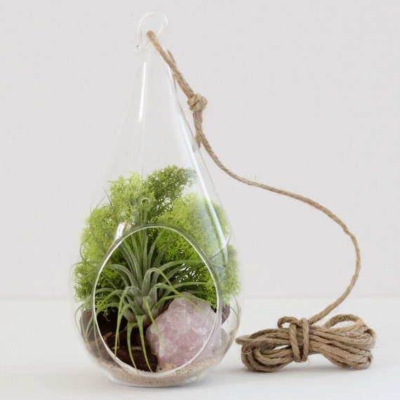 Teardrop Terrarium Kit || Air Plant + Rose Quartz