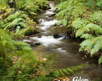 Wilderness River. Long Exposure Flowing Forest River. Nature Landscape Photographic Print.
