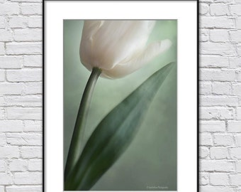 Floral Wall Art Photo Print, Tulip Photography,  Green Off-White Fine Art Photography Print, Spring Flower Photo, Art Gift For Woman