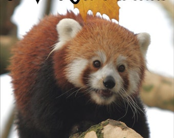 I Love Red Pandas Fridge Magnet 7cm by 4.5cm