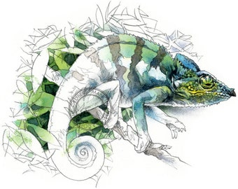 Chameleon watercolour - wildlife art - nature print of original artwork