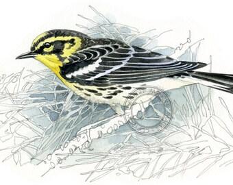 Blackburnian Warbler  - bird art, wildlife art - nature print of original artwork