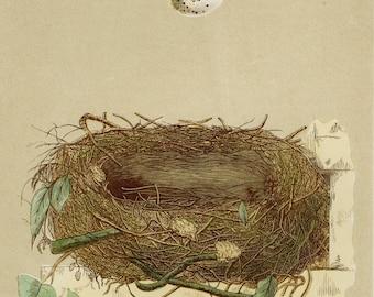 Bird Nest Art Print Orphean Warbler - Spring Decor, Easter, Nest Decor, Bird Gift, Nest Gift - F.O. Morris Engraving 1851 - Matted 11x14