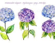 hand painted watercolour blue hydrangea digital clipart printable instant download scrapbook watercolor