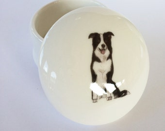 Small Border Collie Trinket Box