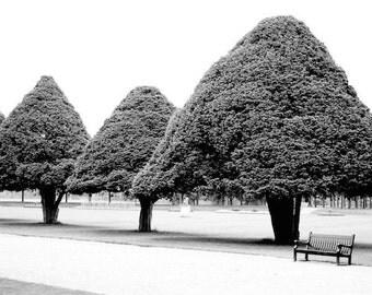 Royal Trees - Original Fine Art Photograph - Trees