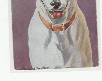 A/S Donaldini Jr The Best Old Portrait Of A Jack Russell Terrier You'll Find Postcard