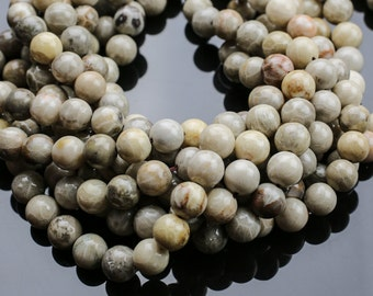 NATURAL fossil coral, High Quality in Smooth round, 4-14mm