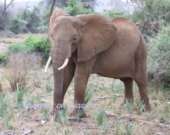 Instant download  - Set of 2 digital photographs - printable download - photo for download -  2 x  Elephant photographs - digital download