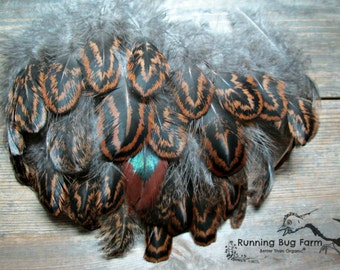 "Real Bird Feathers Cruelty Free Real Feathers Partridge Cochin Hen Plumes Brown Black Feathers Real Feathers For Crafts 25 @ 3 - 3.5"" / PC8"