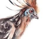 Hoatzin Bird Watercolor Painting Art Print, Bird Watercolour Art, Wall Art, Bird Portrait