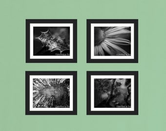 Black and White Fine Art Nature Photography Print Collection 4 Prints 7x5, 8x10 or 20x16 Stylish Wall Art Home Decor