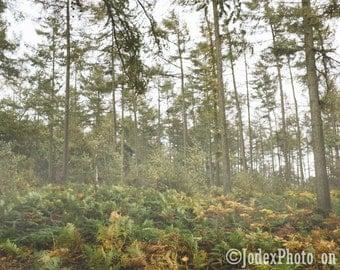 Instant Digital Download Fine Art Photography 'Forest Fog' misty woods printable