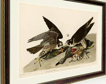 Audubon Hawk Peregrine Falcon Audubon Print Framed 25x20