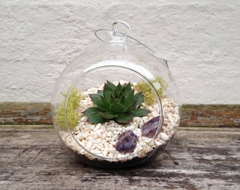 Hanging Glass Terrarium 8cm Kit