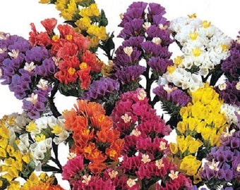 250 Seeds Statice Fortress Mix Flower Seeds