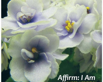 Affirm:  I Am - A Guided Meditation CD by Tracie O'Keefe